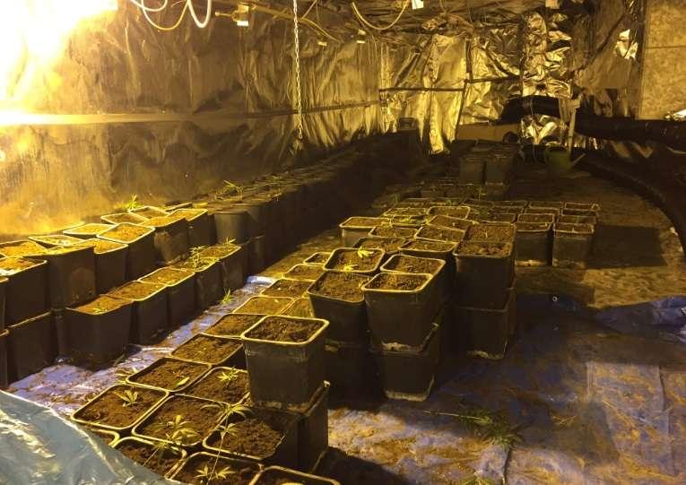 Cannabisplantage in voormalig Valkenburgs Grottenaquarium